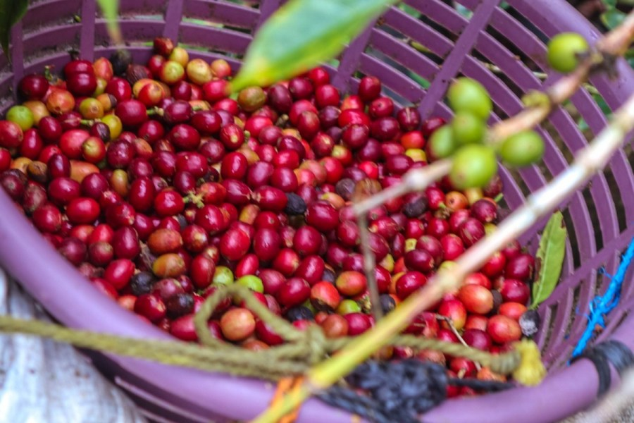 plantatie-de-cafea-BeanZ-Nicaragua-1-of-376-277_1575x1050