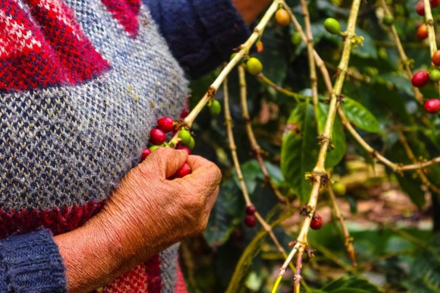 plantatie-de-cafea-BeanZ-Nicaragua-1-of-376-278_1575x1050_1280x853