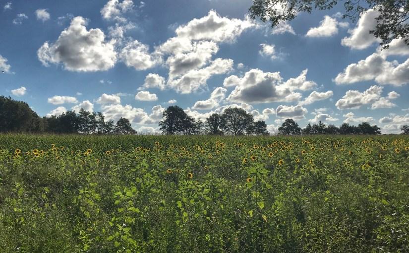 Vakantieblog pt. 1: Friesland.