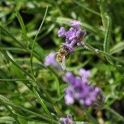Ez itt a méh - mondtaja virág.