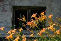 2008-06-22-IMG_0956