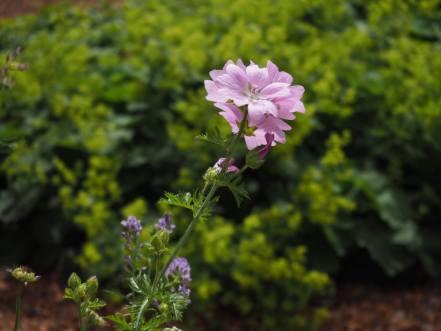 Ez itt a virág.