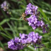 Ez itt a virág - mondtaja méh.