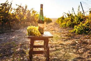 Povestea vinului de #Jurilovca 3