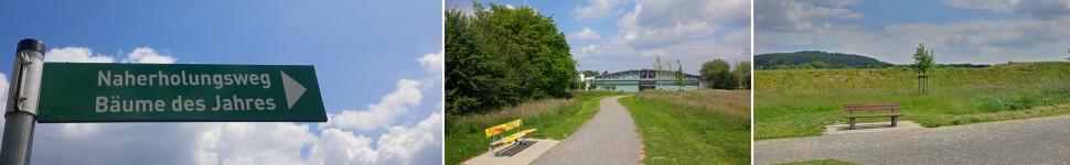 banner-weg-der-baeume-des-jahres