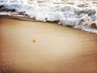 A crab playing with the waves