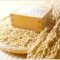 夏場のお米の保存方法!常温だと腐る?冷蔵庫に入れるべき?