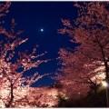 夜桜が綺麗なスポットランキング!関西・関東の見頃や穴場まとめ!