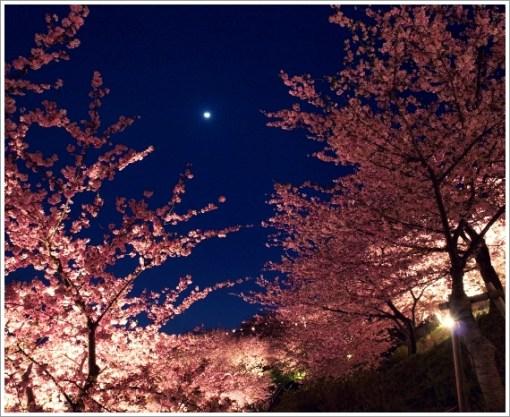 桜、春、夜