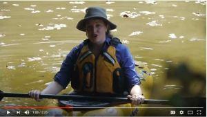 BEECH FORK Bardstown Kentucky Paddle