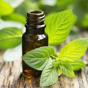 Aceite Esencial de Menta Piperita Liquids Chemical