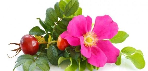Extracto Glicólico de Rosa Mosqueta Liquids Chemical