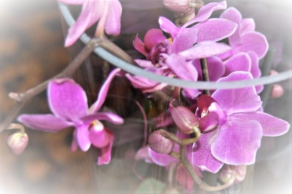 Orchidée - Lire pour surmonter le deuil ©Photographie Nathalie Cailteux