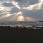 寺泊山田海岸に多くの海藻が流れ着きました。