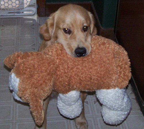 Monty and his new stuffed doggie.