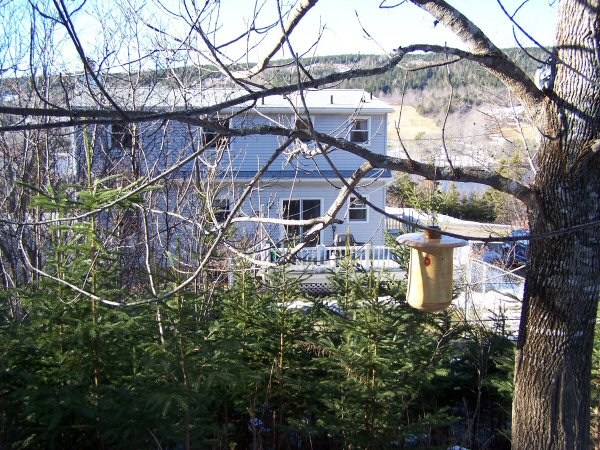 woodsinjanuary2