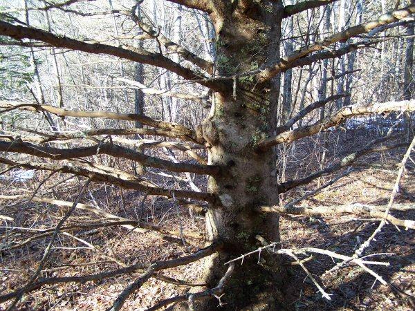 woodsinjanuary3