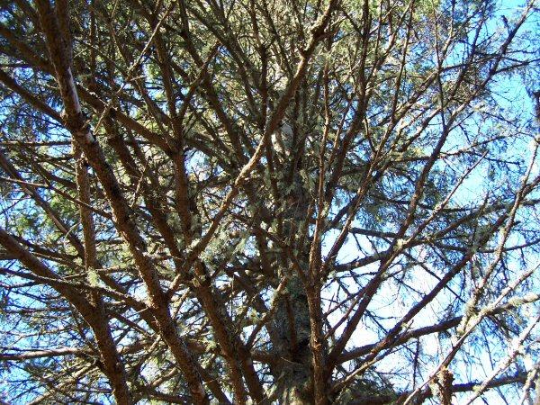woodsinjanuary4