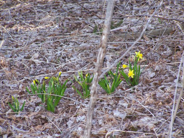 signsofspring13