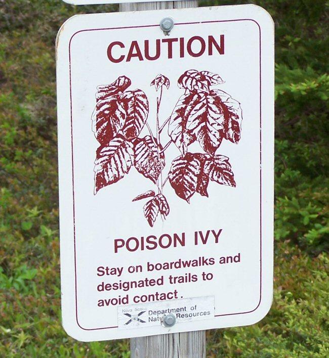 Poison Ivy?