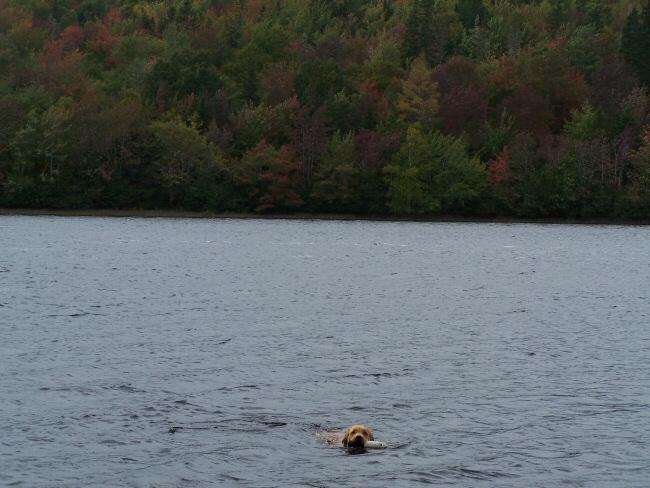 Monty swimming photo