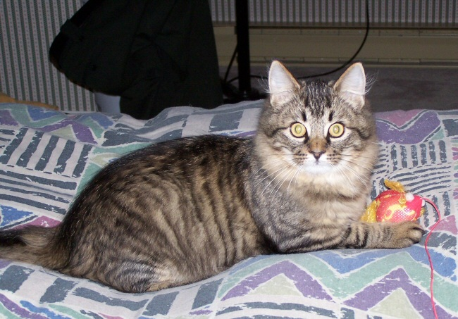 kittensnov1