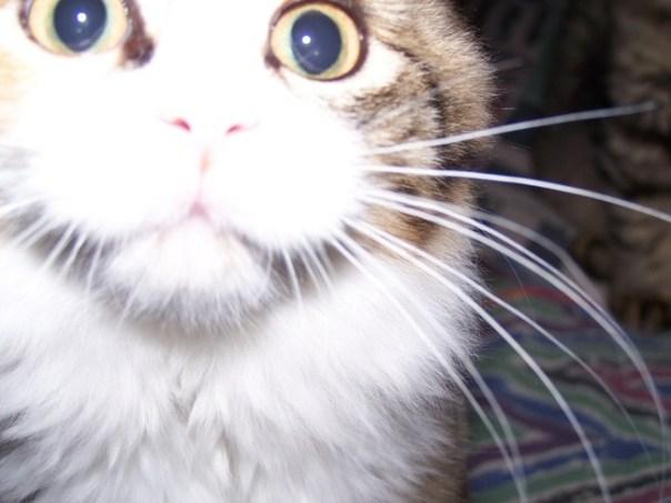 kittensnov3