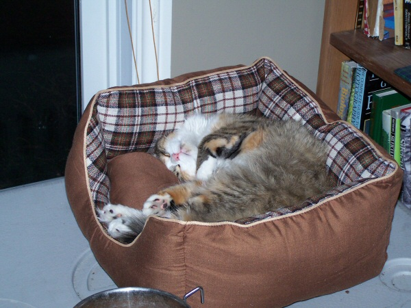 Sally sleeping on her new bed