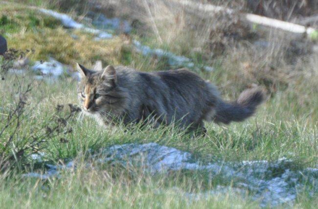 new lawn cat