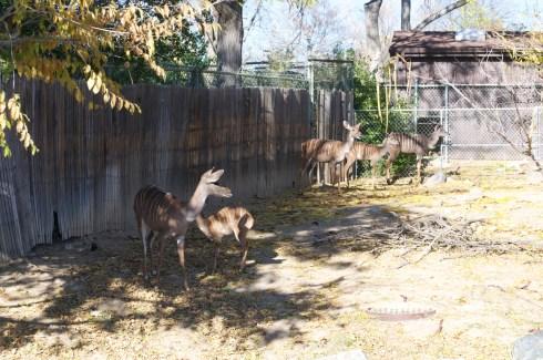Some deer like species