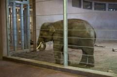 Elephant stuck in concrete bunker :(