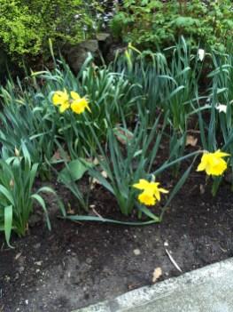 Portland has spring flowers!