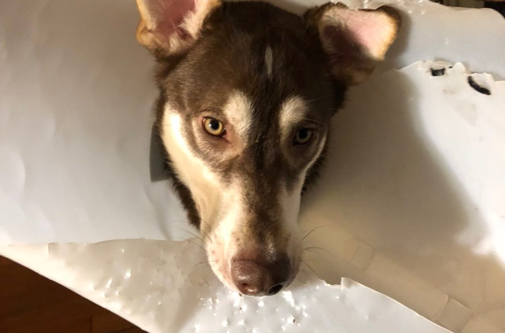The Great Neuter of 2018: Surviving the cone