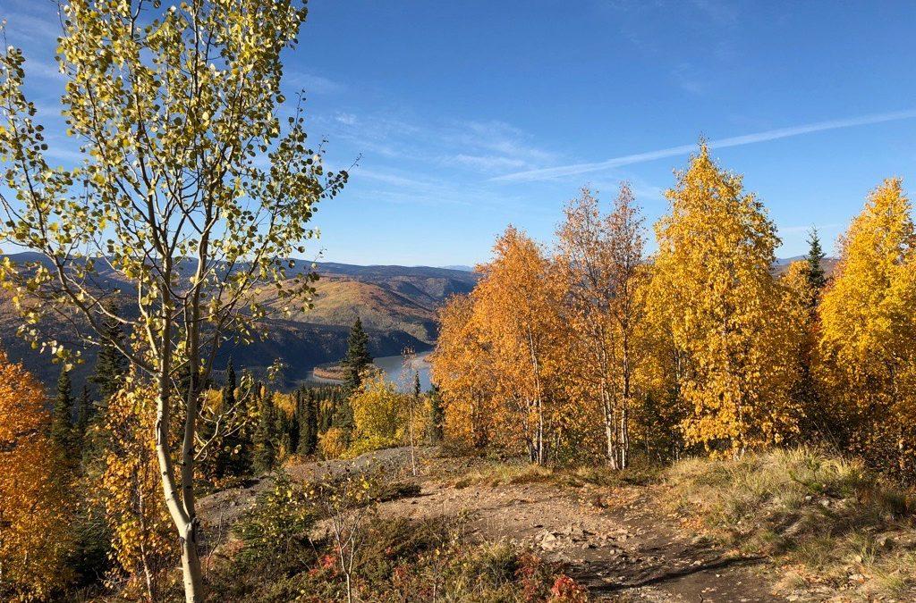 Some fall pics