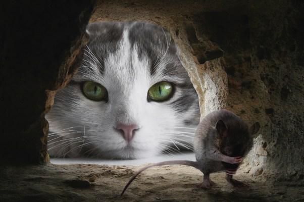 cat-4068840_1920