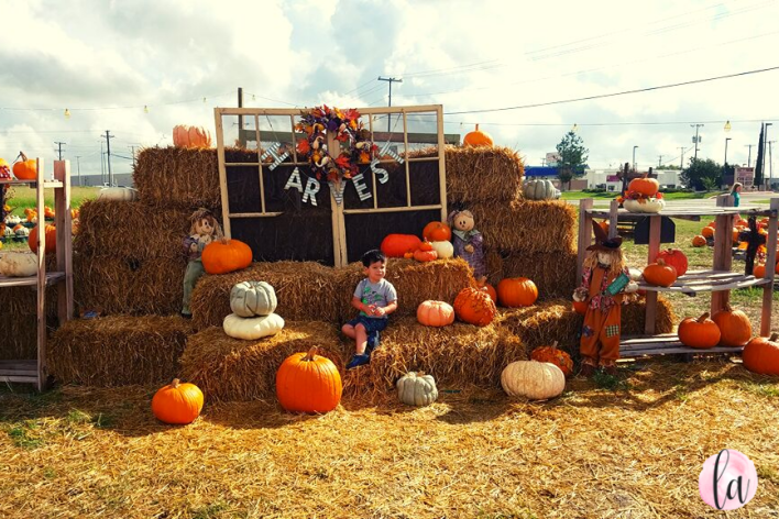 Gruene UMC Pumpkin Patch in New Braunfels, TX