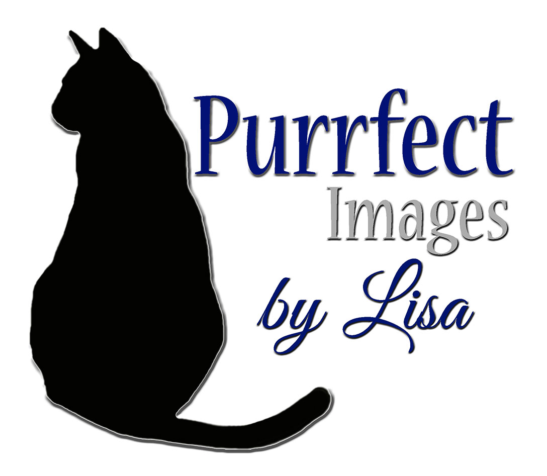 Welcome to Purrfect Images