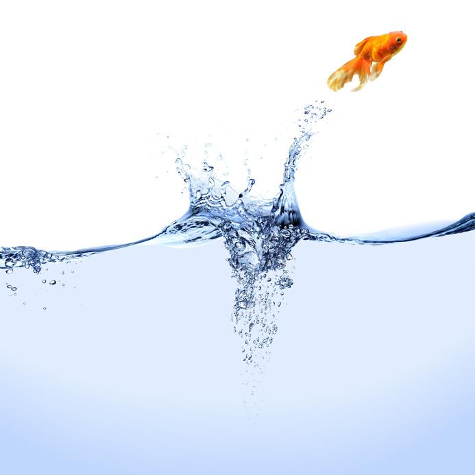 A Fish A Leap A Risk