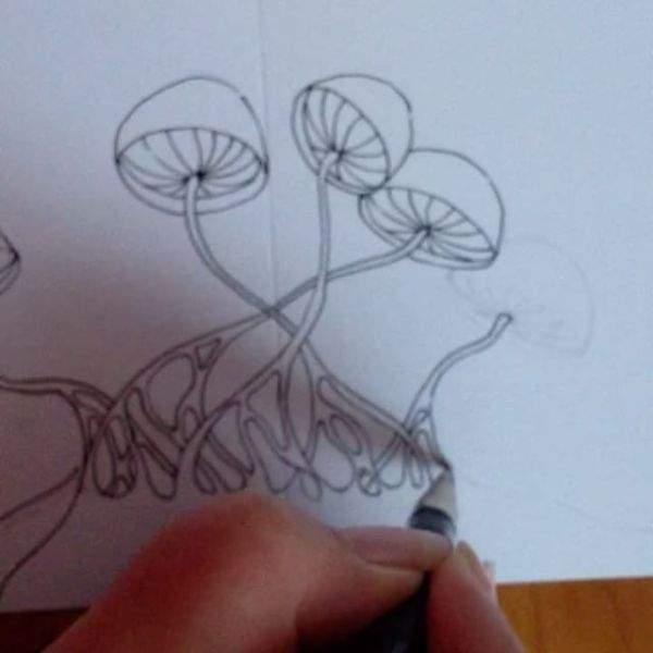 Starting some new shrooms, at high speed, for a hand drawn special card.
