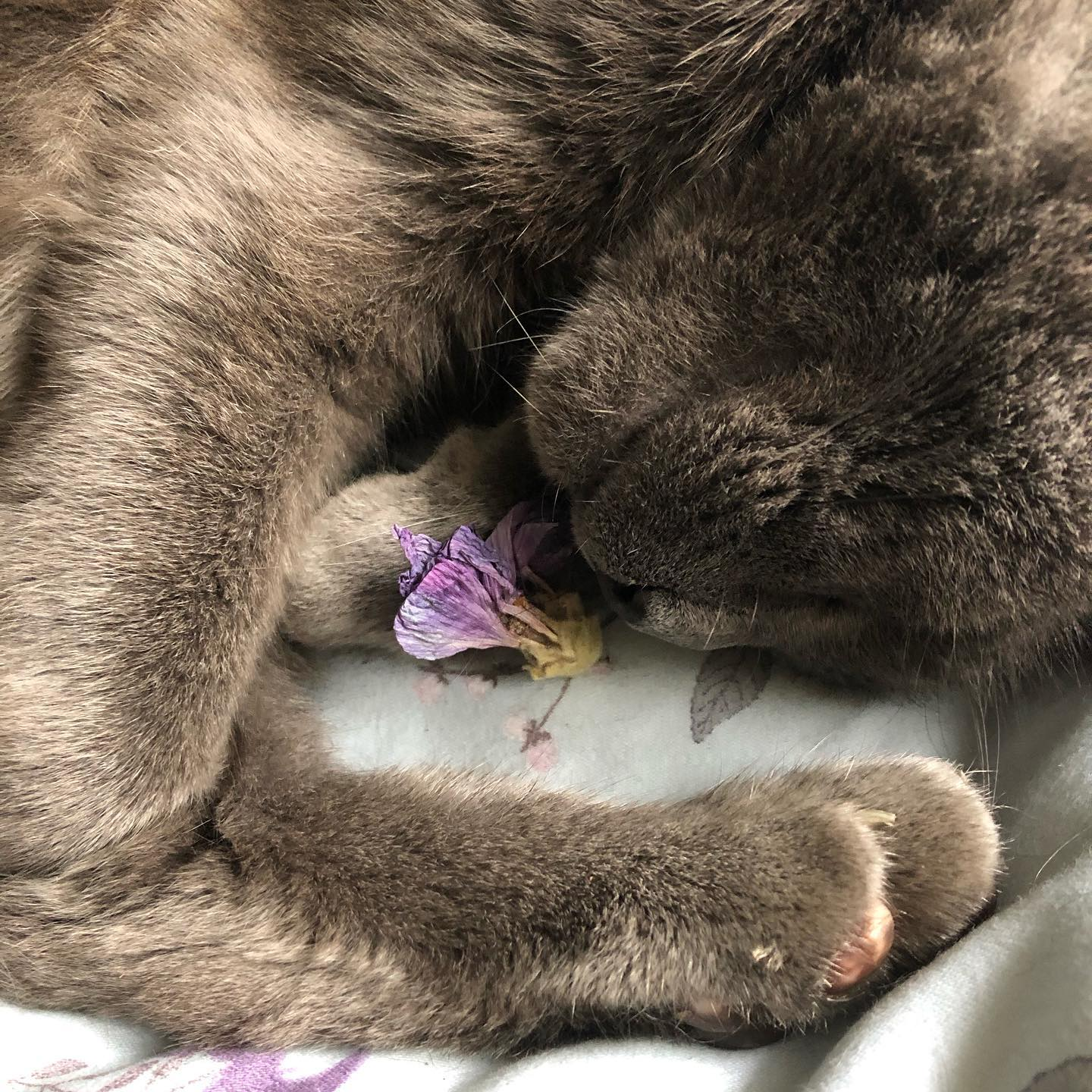 Pussy cat brought in a flower this morning.