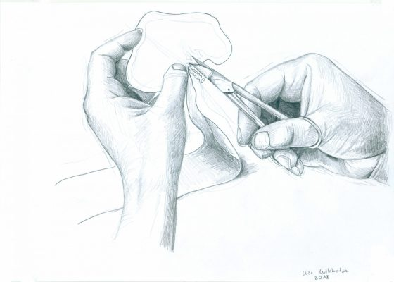 hands making a papercutting drawing by Lisa Cuthbertson