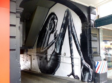 Dunedin - Phlegm