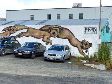 Squirrels - BMD - Mt Eden
