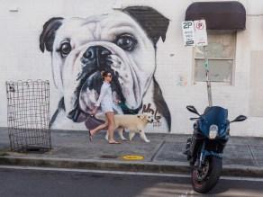 Bond- Dogs of Bondi - Street Artist MrG