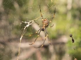 Eek A Spider