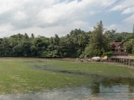 House #1 At Chek Jawa