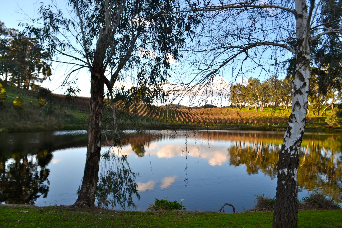 Five of the best wineries in the Adelaide Hills