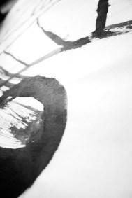 Foto siamo alberi 02