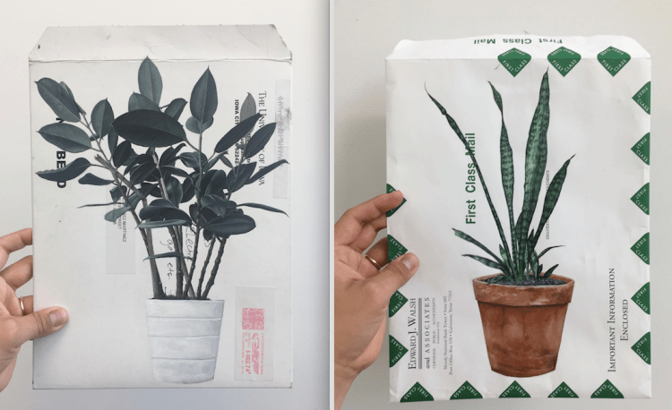 Fifield-Perez's series 39. El Nopal includes these plant portraits of acrylic on found envelopes
