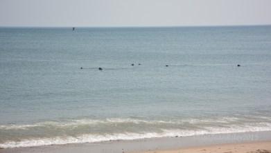 Marconi Seals 2